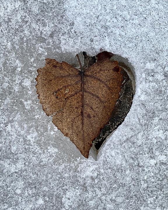 Frozen Redbud Heart
