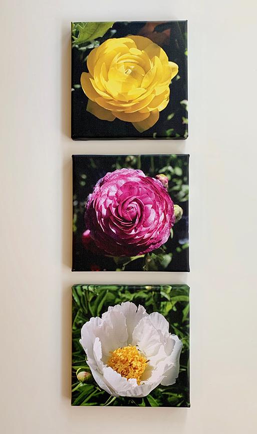 Floral group 1.jpg