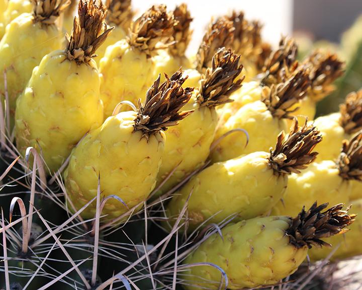 Barrell Fruit