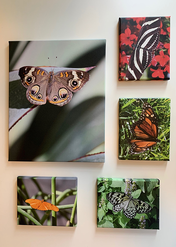Butterfly collection 5.jpg