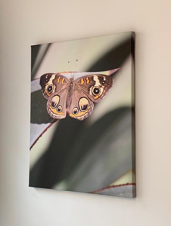 Butterfly single.jpg