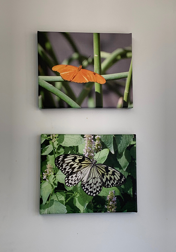Butterfly collection 7.jpg
