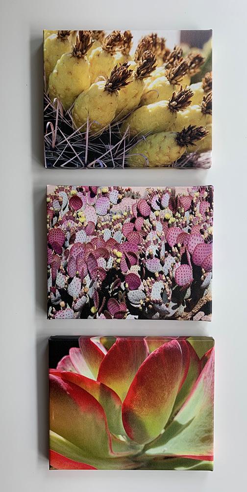 Cactus group3.jpg