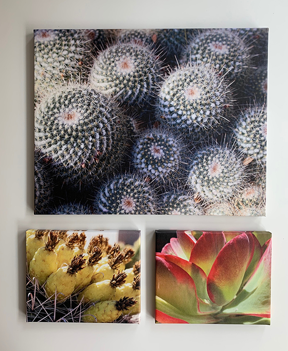 Cactus group4.jpg