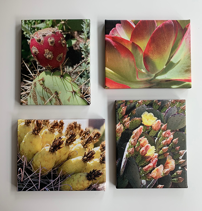 Cactus group5.jpg