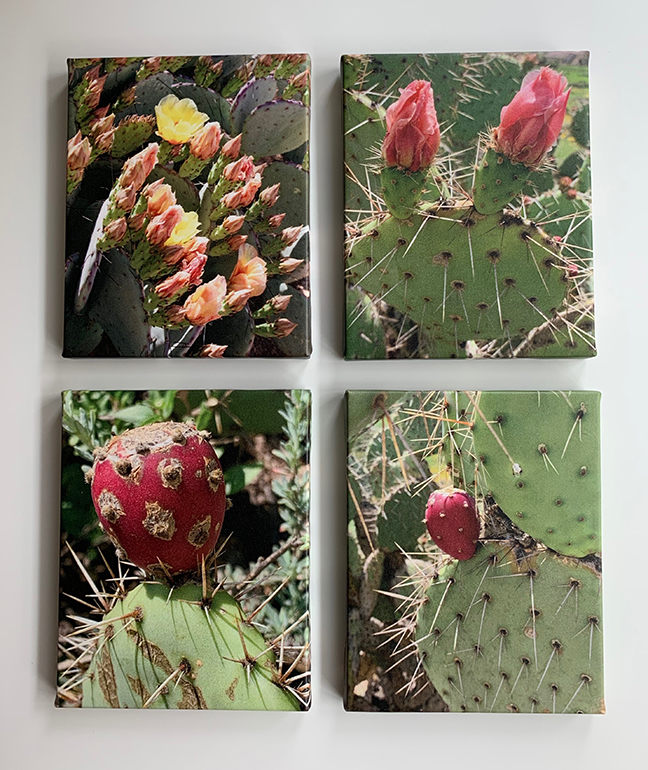 Cactus group12.jpg