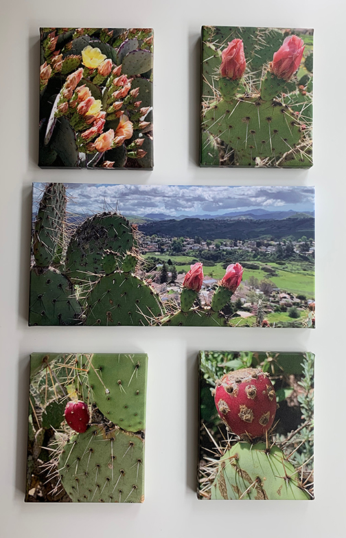 Cactus group13.jpg