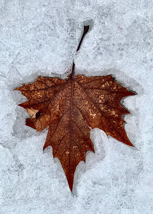 Frozen Maple Coffee