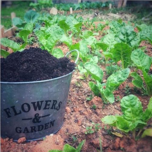 coffee grounds garden.jpg