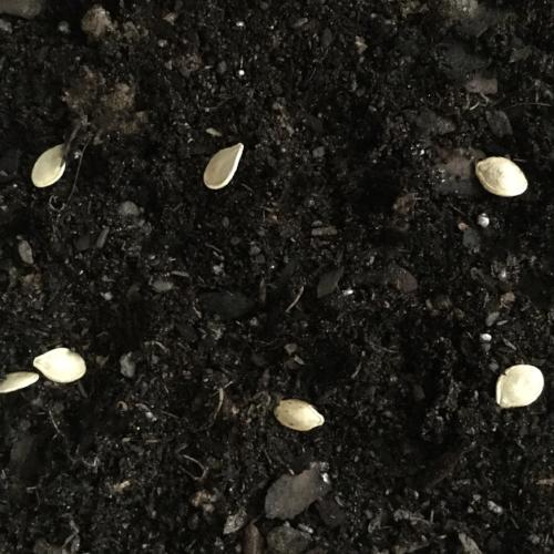 seeddepth.png