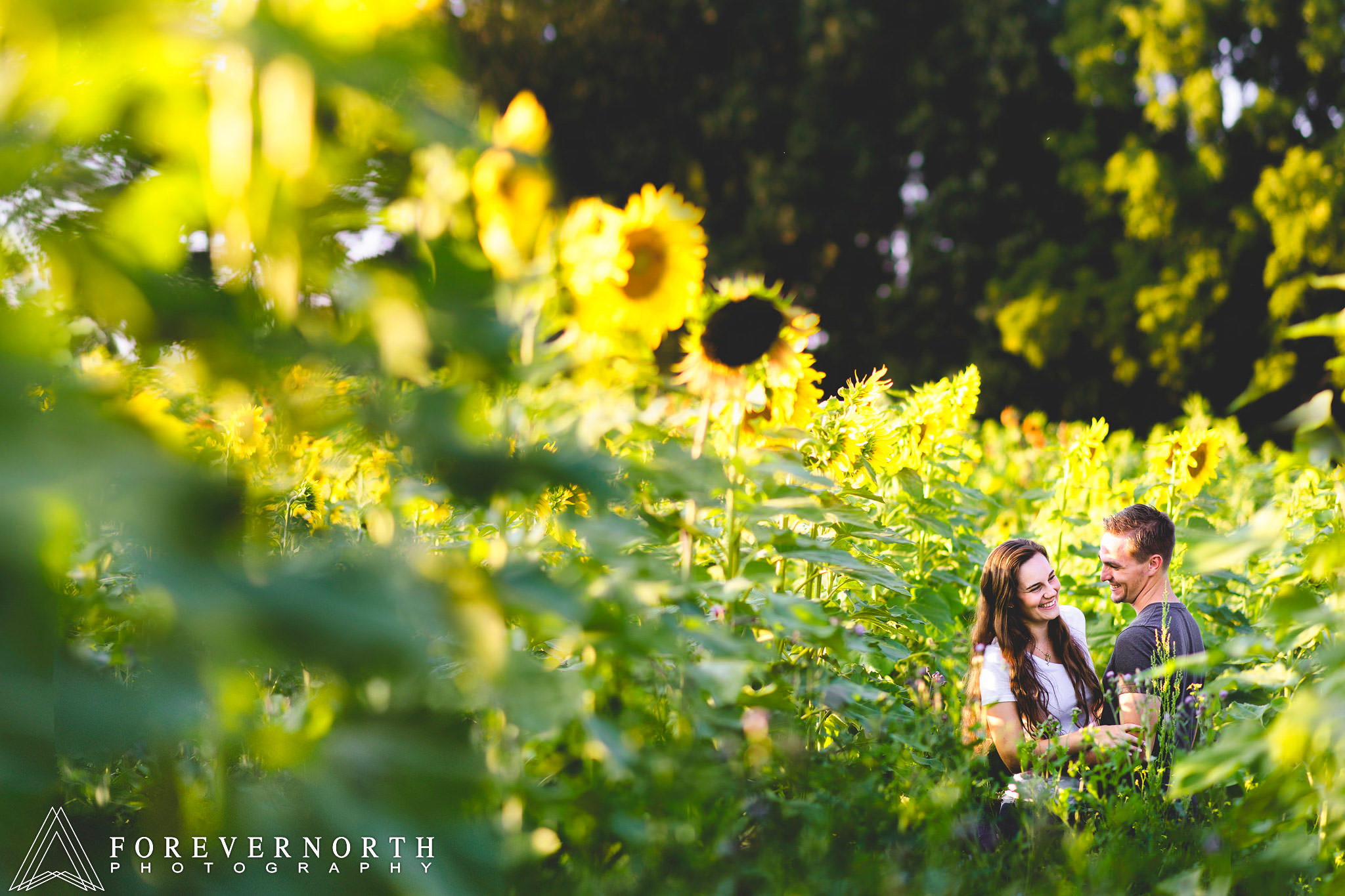 Ennis-Sussex-Sunflower-Maze-Engagement-Photos-10.JPG