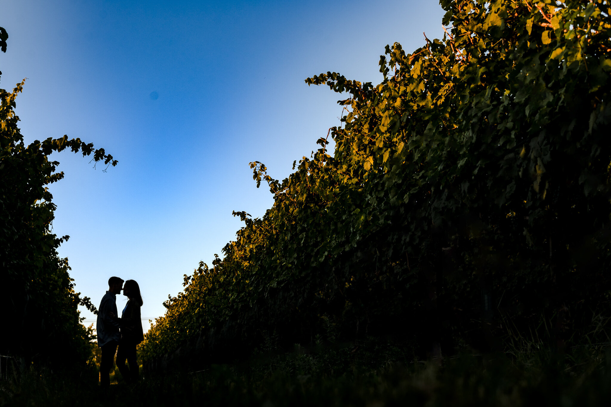 Carlin-White-Horse-Winery-Engagement-Photos-12.JPG