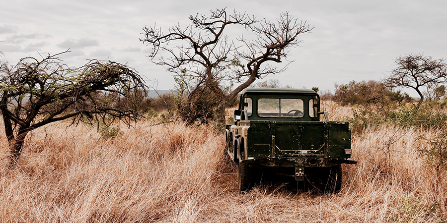 Kruger-South-Africa-Safari.png