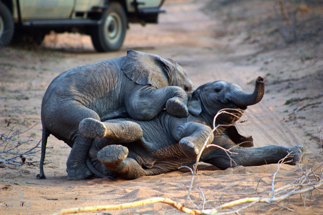 Elephant Interaction Tour with Kapama Lodge while on CPE Conferences trip