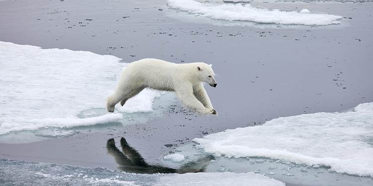 The-Arctic-Expedition-Polar-Bear.png