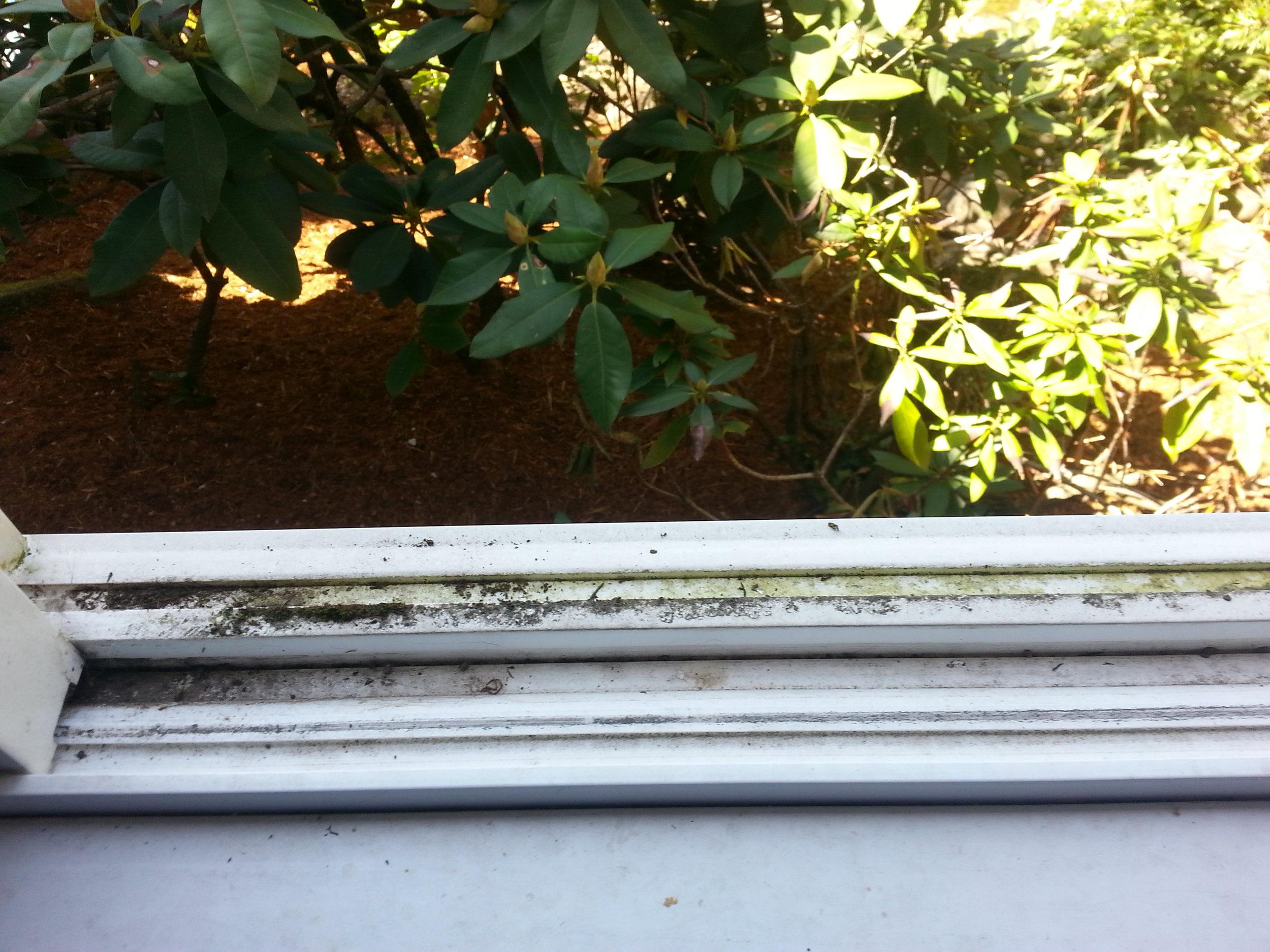 Window Track Dirty.jpg