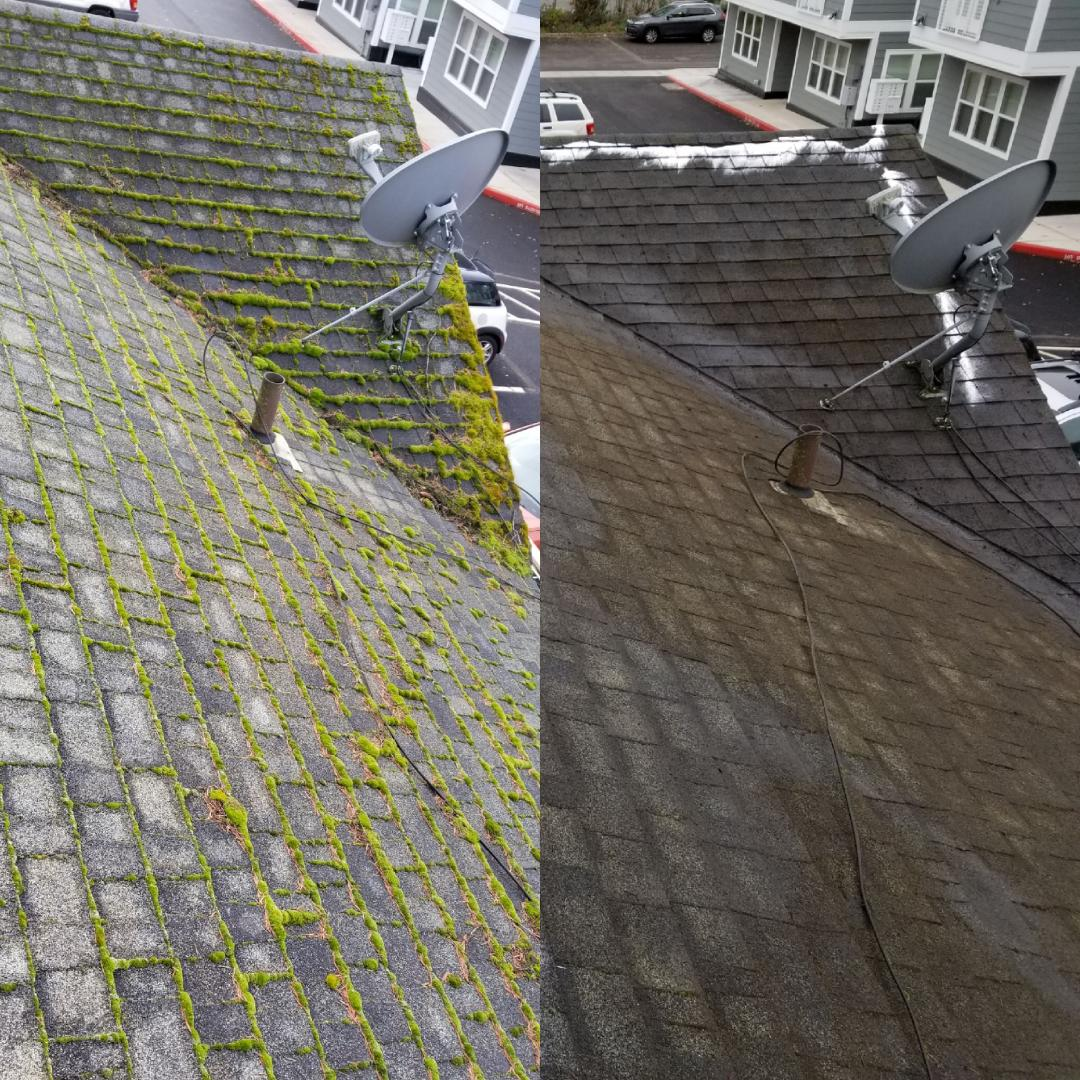 moss before and after.jpg