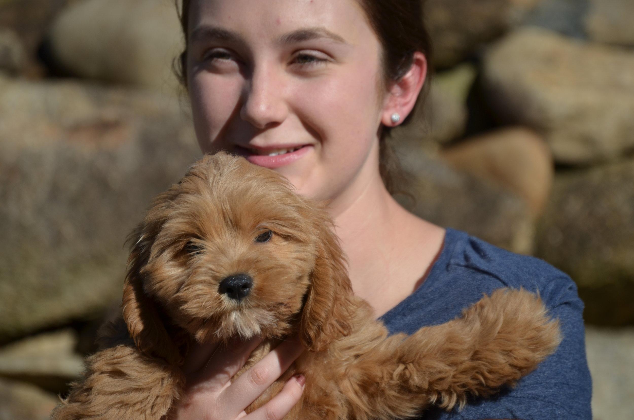 red-Cavapoo-puppy (15).JPG