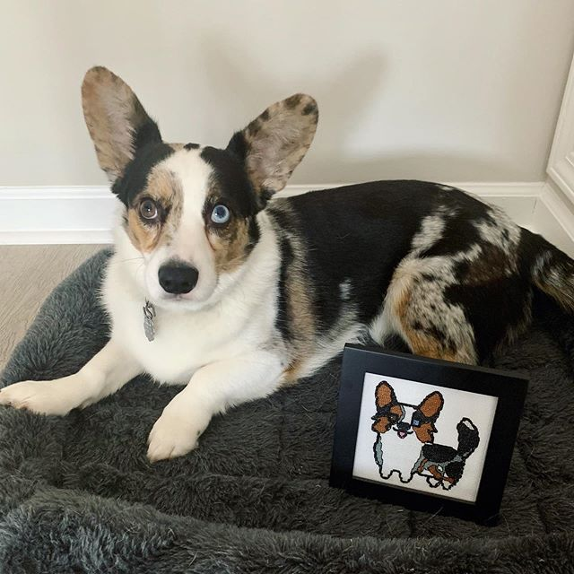 Here's a cutie to brighten up your Monday morning!! I cross-stitched this little doggie replica for my boyfriend last Christmas, and just got around to taking photos with the muse himself this weekend!! Self made pattern so I could get his gorgeous #corgi details all correct!  #sewing #isew #crosstitch #needlework #diy #diyhomedecor