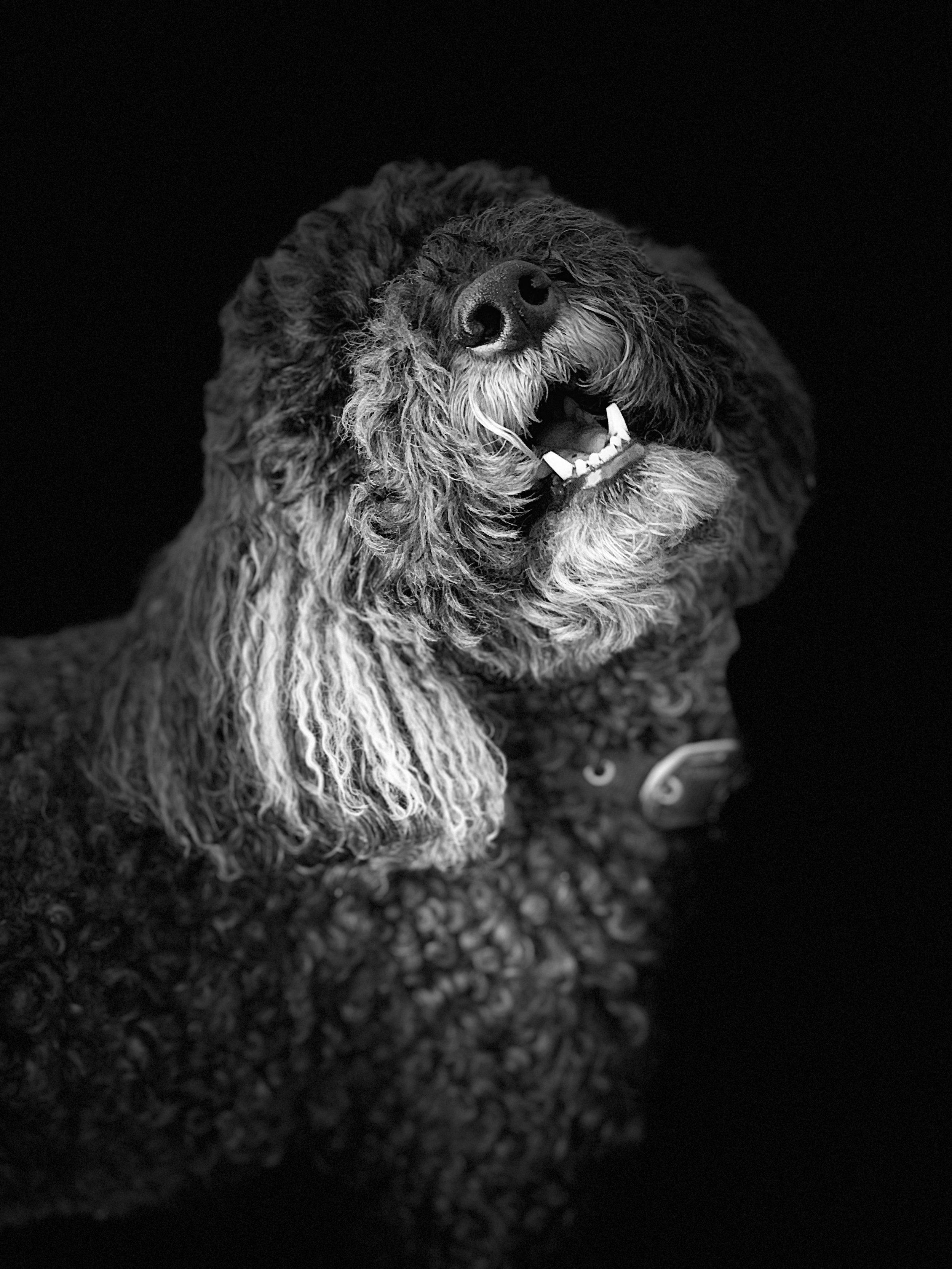 Portrait mode dog