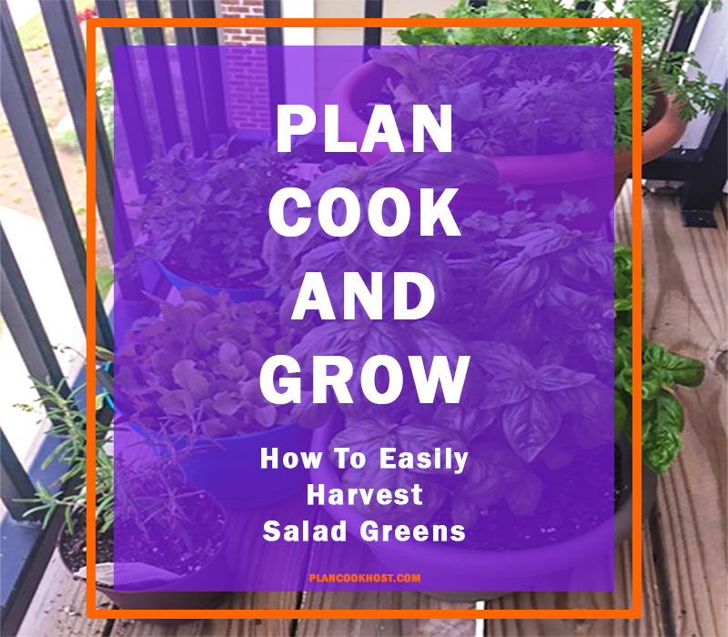 PCG - How to easily harvest salad greens blog cover