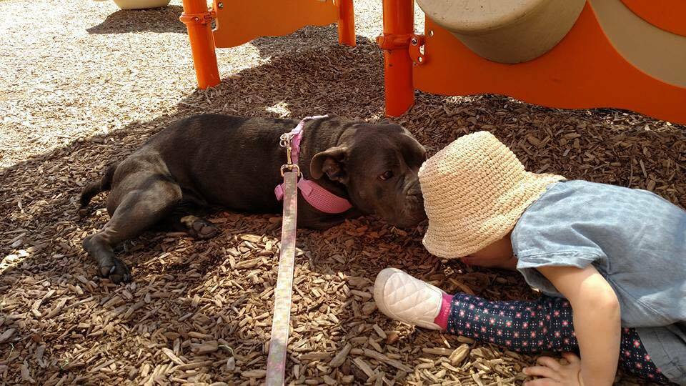 Bluebelle playing with her friend at the park, being sure to never leave her side.