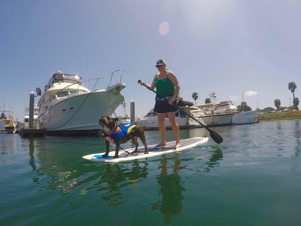 Photo Credit:  SUP Pups California