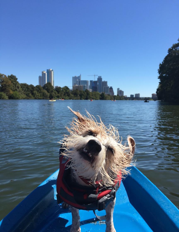 Dog Kayaking Austin Texas Ladybird Lake