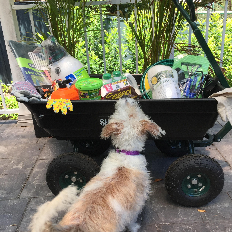 Ada checking out the garden goodies.