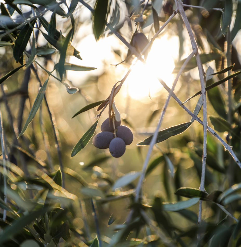 image-our-olives@2x.png