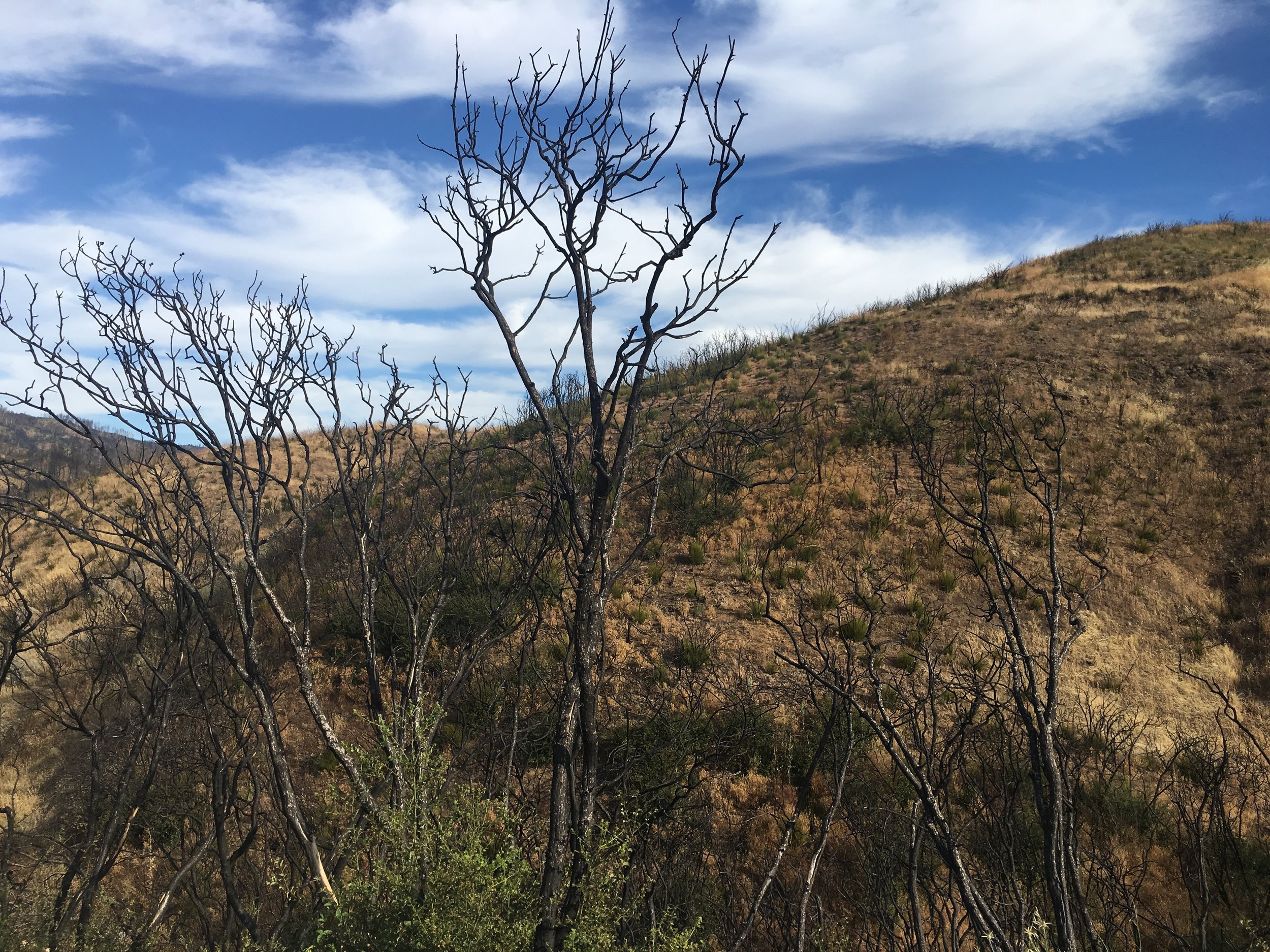 - The burn area on 175 is still a reminder of the fires in 2018.