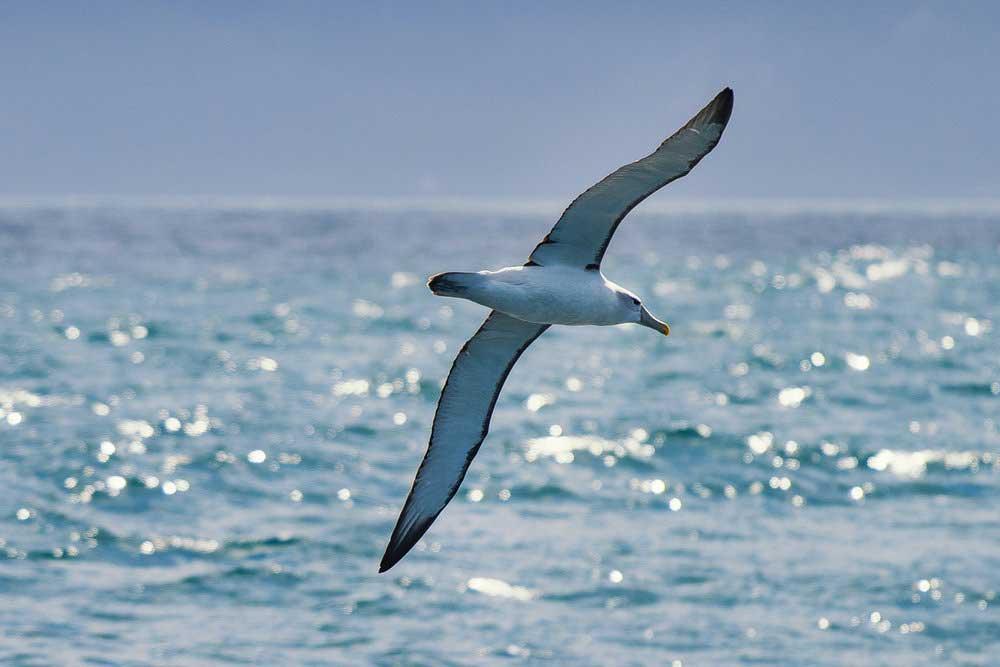 Albatross Encounter!