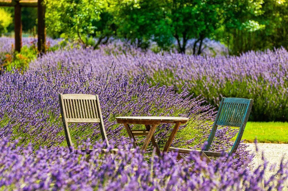 Lavendyl Lavender Farm