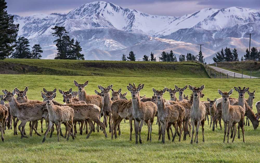 Deer Farms