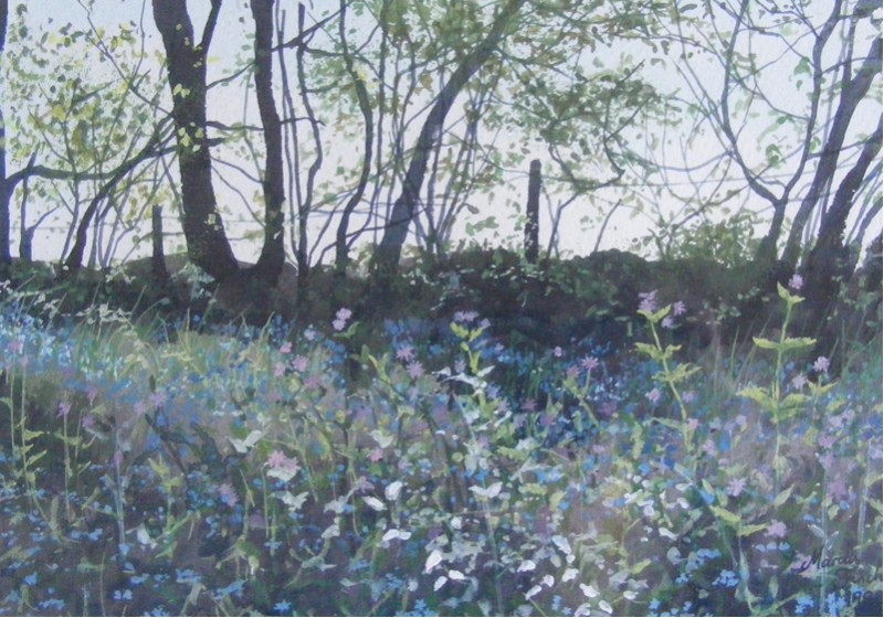 Bluebells at Greatham Woods dev  .jpg