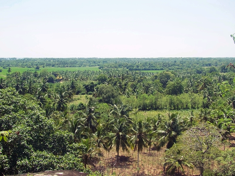 Jungle-view-from-the-temple.jpg