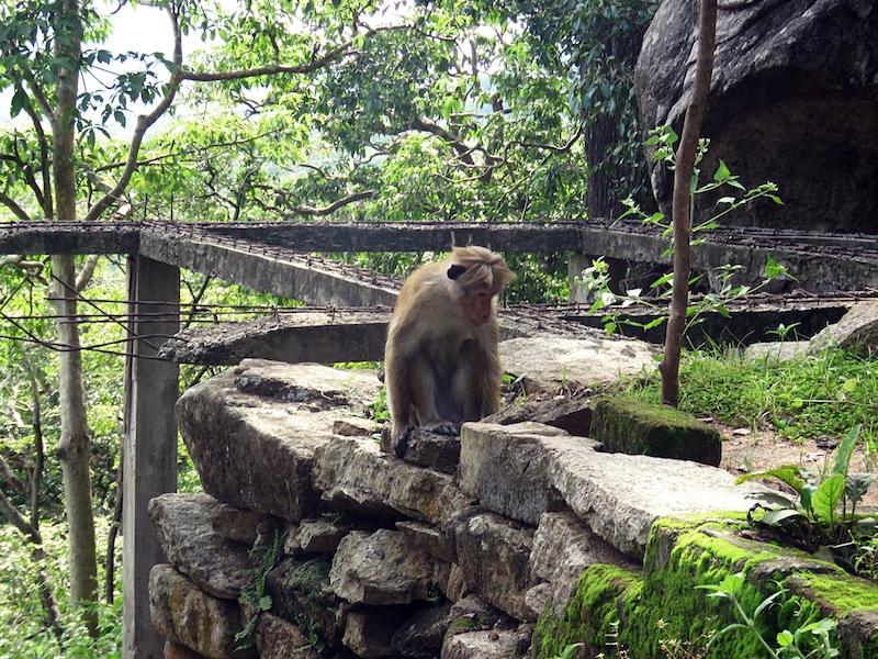 Galgiriyawa-monkeys.jpg
