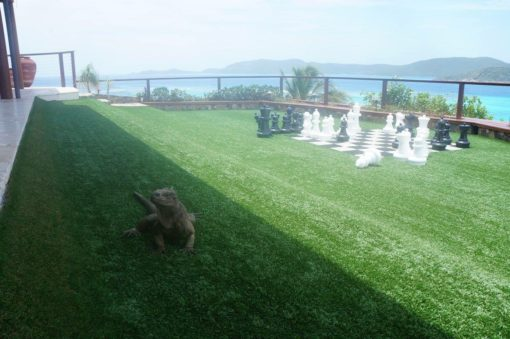 Perhaps a game of chess with the iguana?