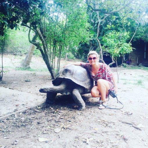 One of the giant Aldabra tortoises