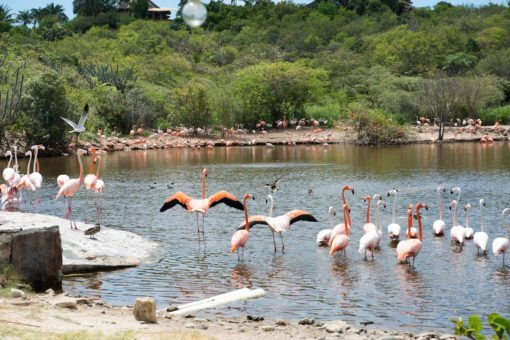 At Flamingo Beach