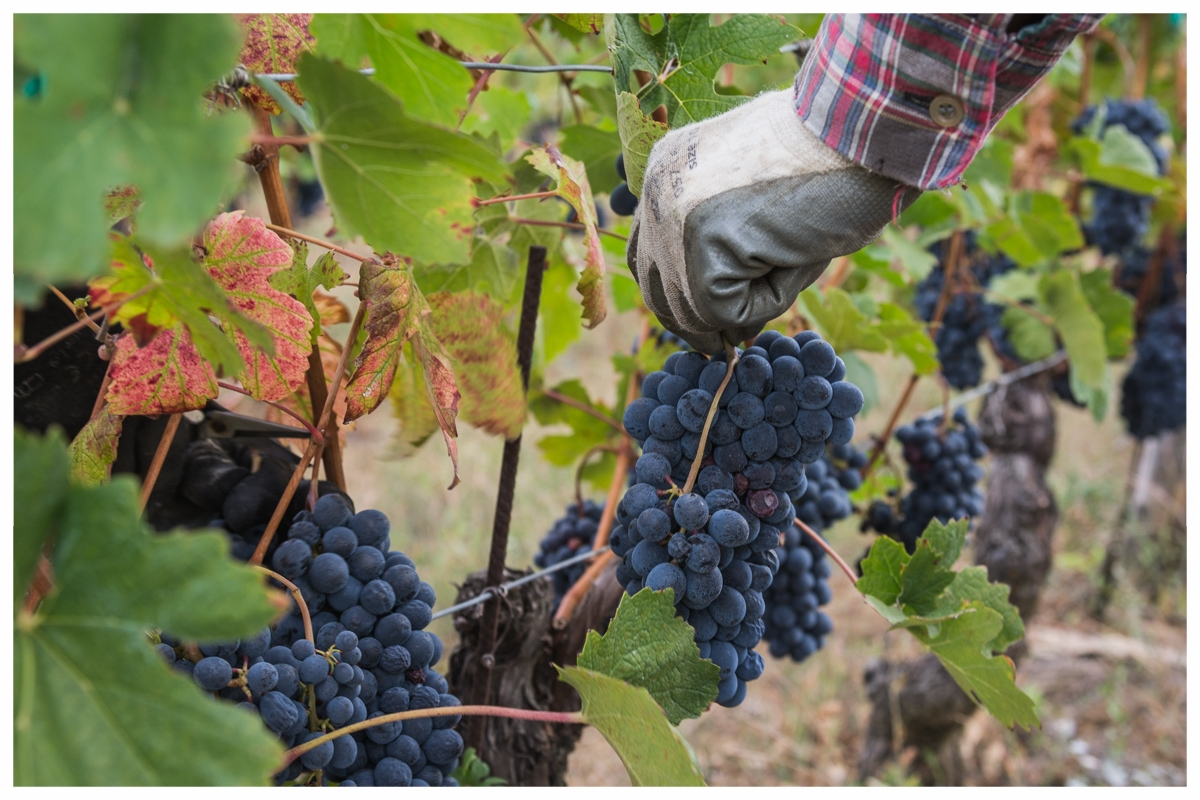 The wines of Cascina Montagnola, Colli Tortonesi DOC, are imported by Terrestoria LLC, Salt Lake City, Utah.