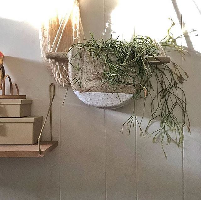 Pot + plant + location! How gorgeous is this pic by @jasonchongue  #luckyanna #hangingplant #handmade #handbuilt #jasonchongue