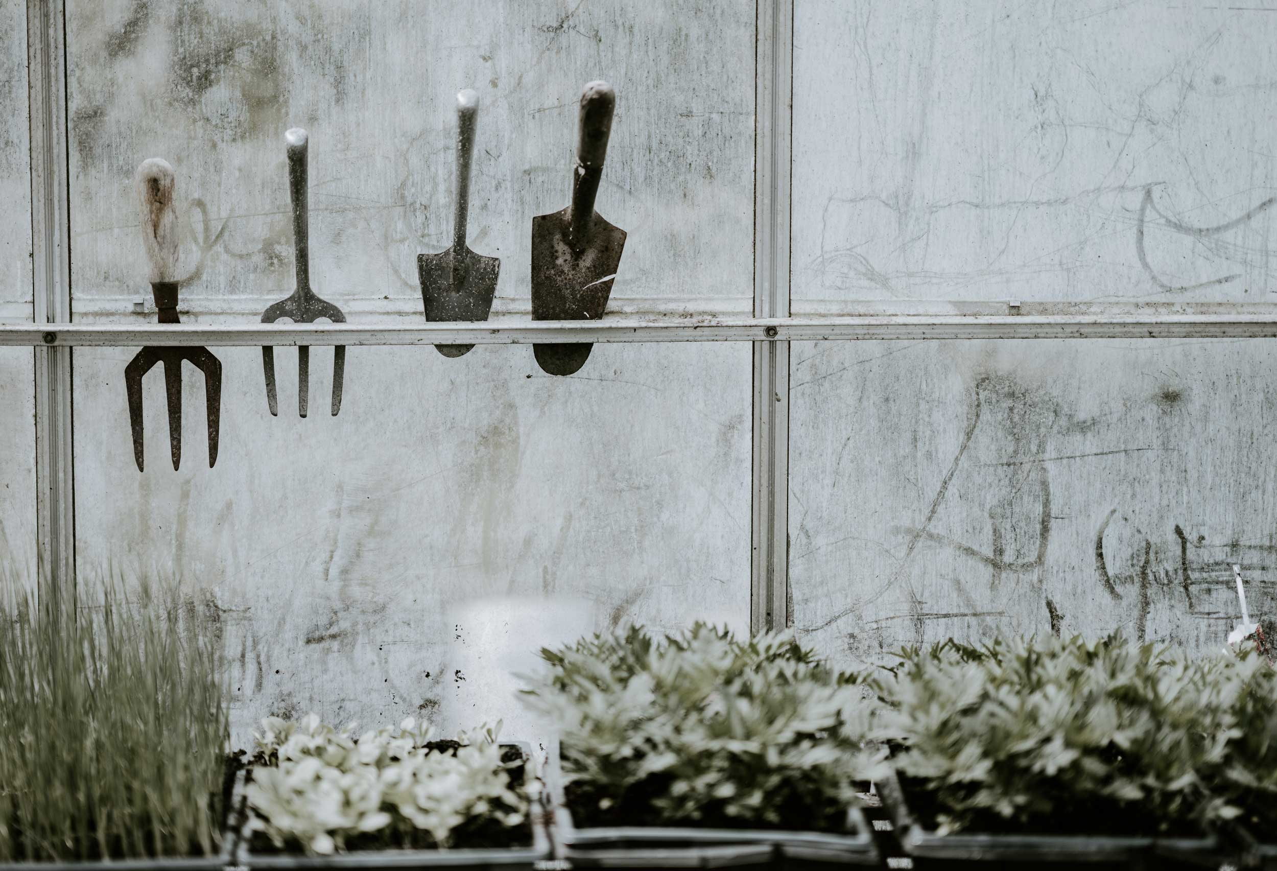 Inside a greenhouse, small spades and window