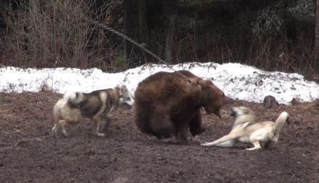 Bear 3.jpg