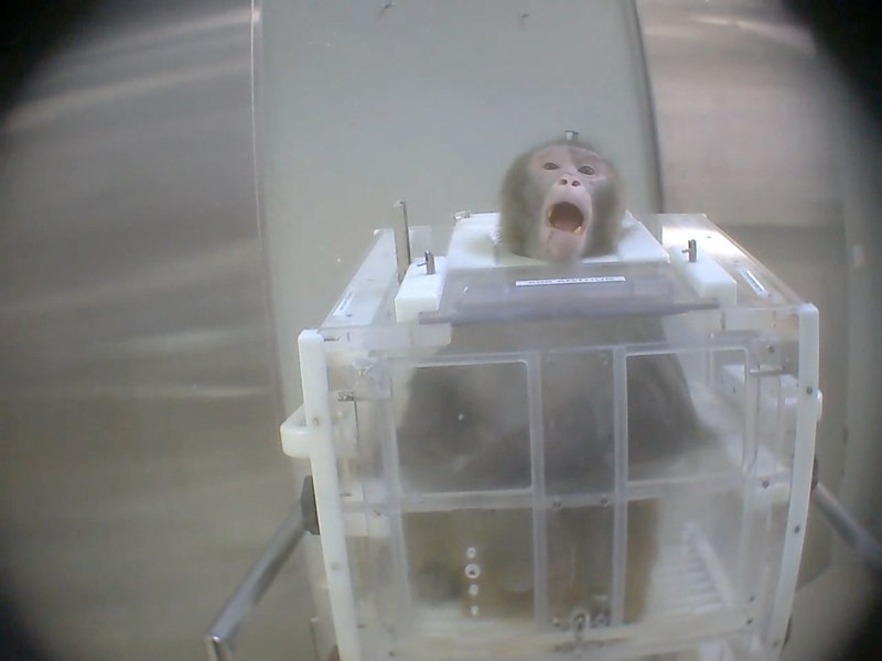 Monkey 3.jpg
