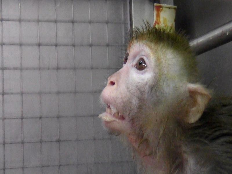 Monkey 4.jpg