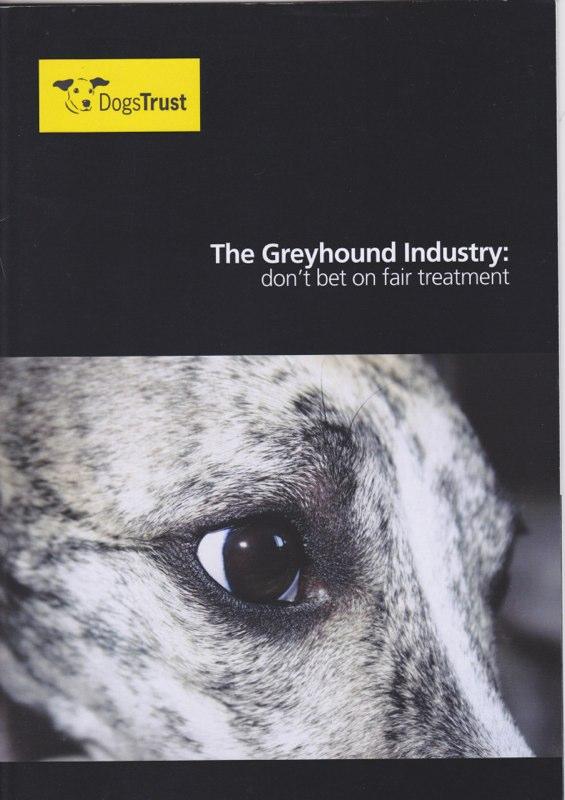 greyhound dog 1.jpg