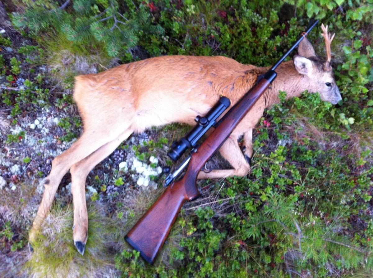 Foto: Frode Sømåen ID:682