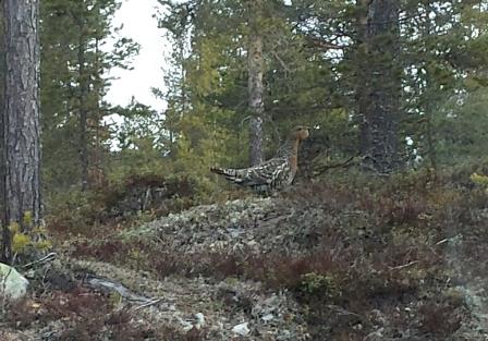 Foto: Arkiv/Lars Erik Pettersen. ID:614