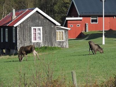 Foto: Bjørnar Johnsen ID:437